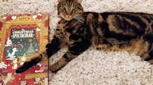 A Purrfect Review Of Lily's Kitchen Advent Calendar –By My Cat