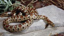 Reptilien-Photobombing: Wie kommt die Schlange auf das Schulfoto?