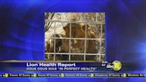 Lion in Cat Haven attack did not have rabies