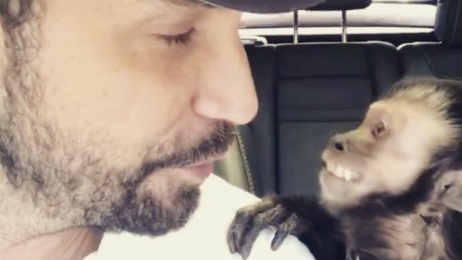 Macaco de Latino morre atropelado