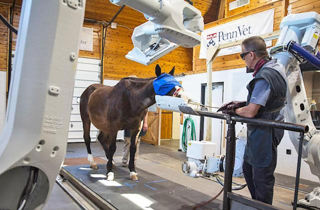 Equine CT scanner can peek inside standing, conscious horses