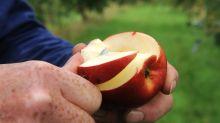 Wie Raucher und Trinker von Äpfeln und Tee profitieren