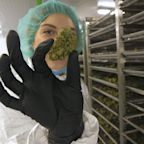 Cannabis has gone from a criminalized drug to a multibillion-dollar global boom in just a few years. Here's everything you need to know about  the emerging legal cannabis industry.