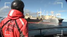 L'association Sea Sheperd à la poursuite des chasseurs de baleines, les nouveaux scandales de la maltraitance animale dans Enquête Exclusive dimanche à 21:00 sur M6