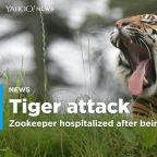 Zookeeper hospitalized after tiger attack at Kansas zoo