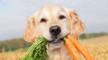 É possível criar cães e gatos veganos? Descubra