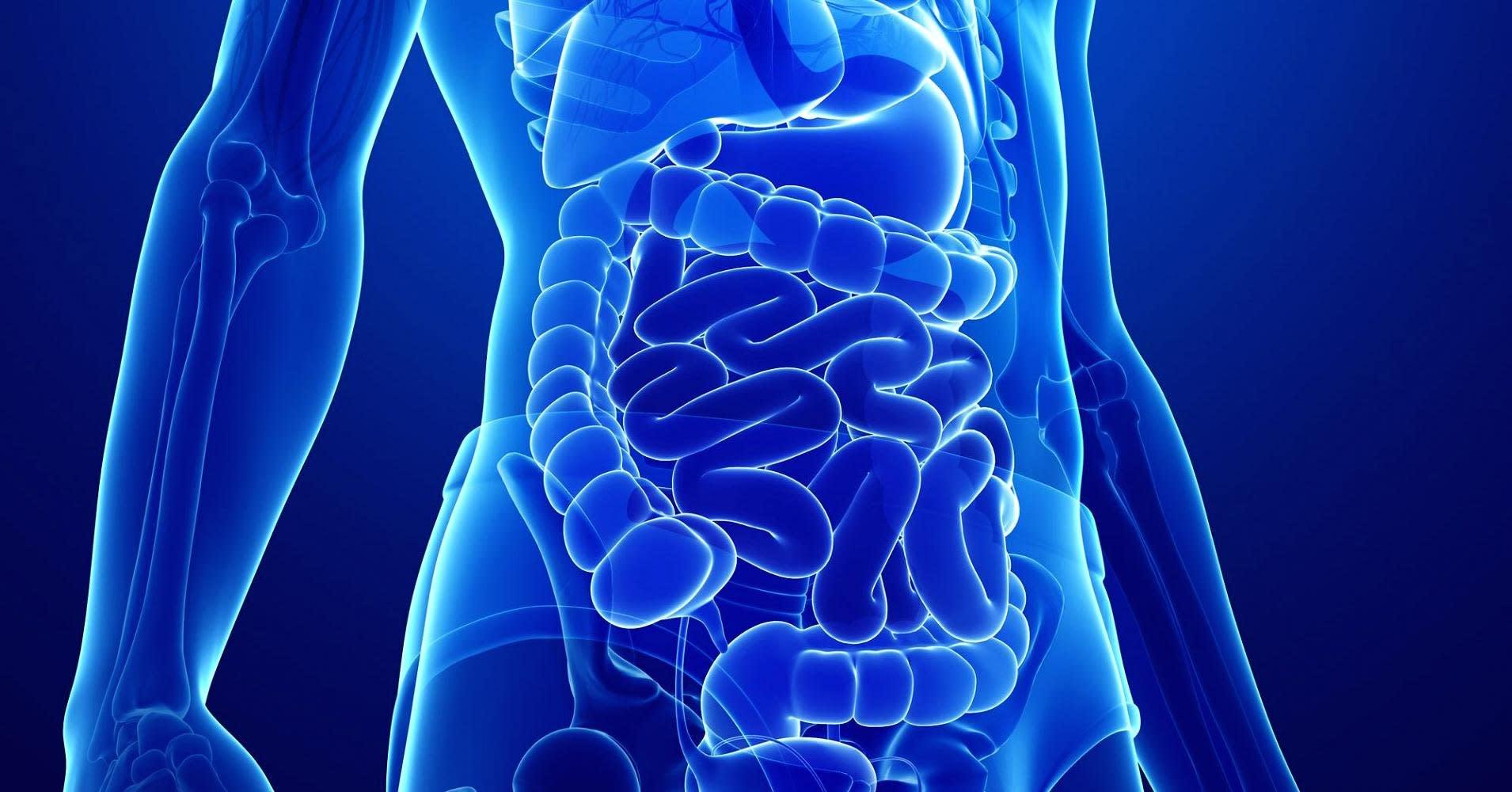 Scientists identify a new human organ