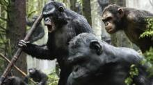 Apes Misbehavin': A Zoologist Explains What Would Happen If Big-Screen Animals Attacked