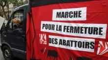 Dordogne: L214 cible un abattoir de veaux, la préfecture ne voit pas de non-conformité
