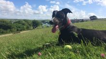 Dog-friendly holidays: Why Newquay in Cornwall is best