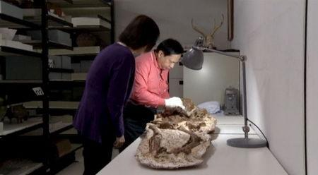 Chu Whei-Lee, a curator in the Anthropology Department at Taiwan's National Museum of Natural Science, stands next to a man cleaning a fossil of a mother and baby in Taichung City, Taiwan, April 26, 2016 in this still image taken from video. REUTERS/via Reuters TV
