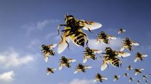 Get ready for Swarmageddon! Record number of wasps to hit southern England