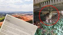 'Bloody frustrated': Developer says government left him no option but to shoot 40 kangaroos