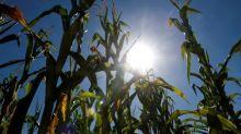 Sécheresse: plusieurs régions affichent des niveaux de précipitations exceptionnellement faibles cet été