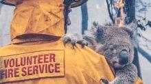 【澳洲山火捐款方法】食「日版」樂天熊仔餅救澳洲樹熊!原來一捐就捐了足足26年