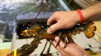 'Lucky' Lobsters Jam China Flights, Sending U.S. Prices to Record