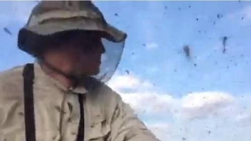 Mosquitoes swarm at Alaskan arctic tundra