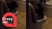 Stunned cat owners catch their new cat using the loo - like a human