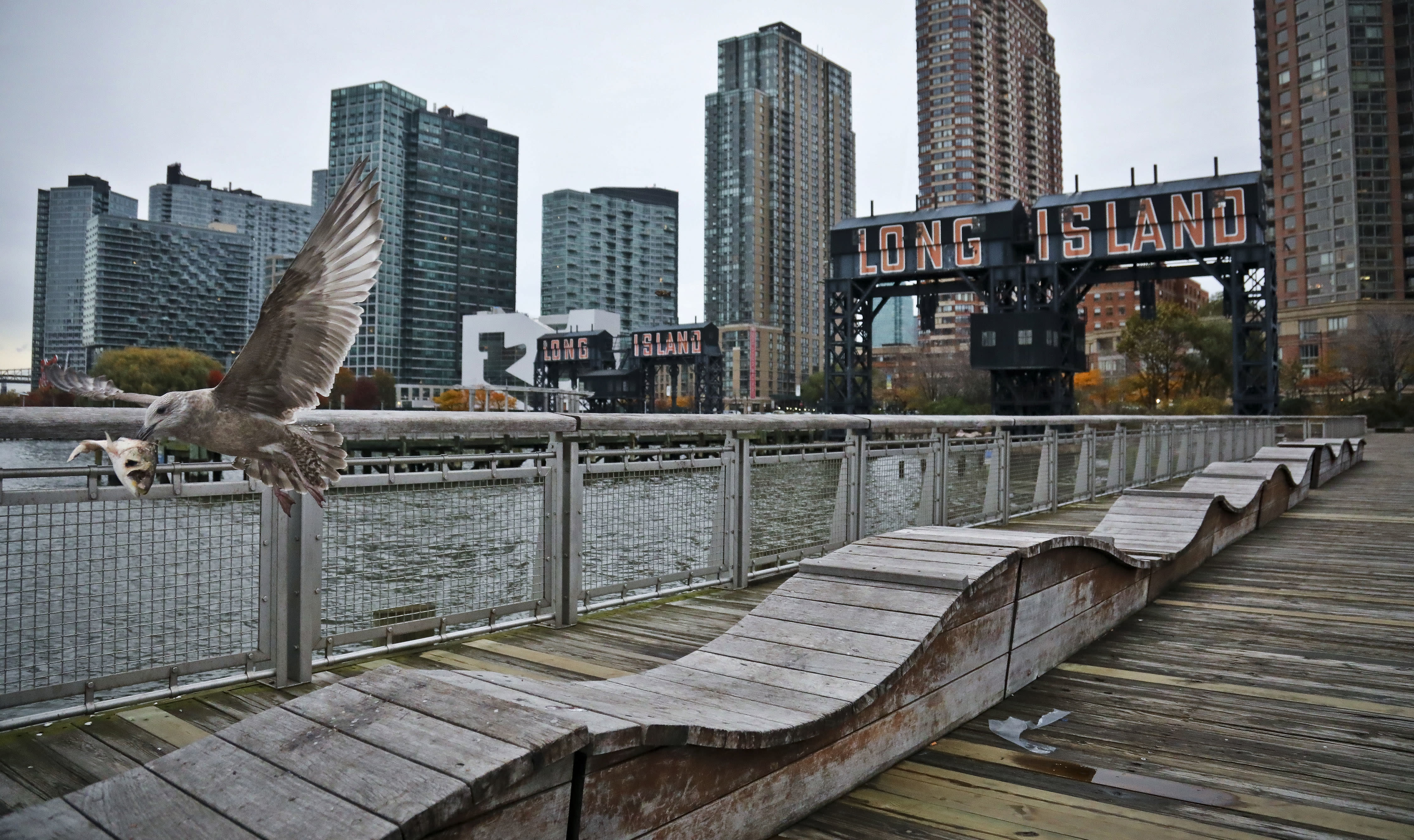 """FILE - In this Nov. 13, 2018, file photo, a sea gull flies off holding fish scraps near a former dock facility, with """"Long Island"""" painted on old transfer bridges at Gantry State Park in the Long Island City section of the Queens Borough in New York. Amazon said Thursday, Feb. 14, 2019, that it will not be building a new headquarters in New York, a stunning reversal after a yearlong search. (AP Photo/Bebeto Matthews, File)"""