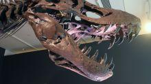 Fósil de dinosaurio, juguetes vintage... Así gastan su dinero los jóvenes ricos durante la pandemia