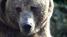 Italie: un militaire agressé par un ours, capturé après les faits
