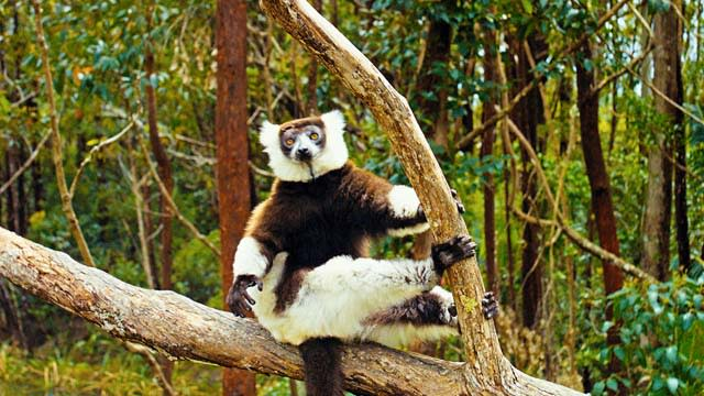 'Island of Lemurs Madagascar' Trailer 1