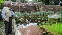 Gardener uses Colombia lockdown to save botanical paradise