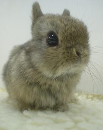Robots could replace live bunnies in chemical testing procedures