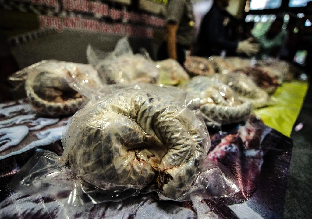 Pangolins are the world's most heavily trafficked mammal