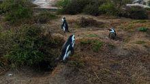 6 Tempat Terbaik untuk Dikunjungi di Afrika Selatan