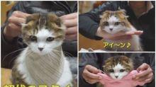 【新片速報】日本喵星人獨門絕技 貓頭向前伸超可愛Twitter熱傳