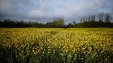 El impacto negativo en las megaproducciones agrícolas en la naturaleza