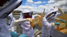 Bien-être au travail: et si votre entreprise recrutait des abeilles?