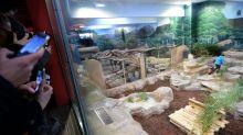 Le zoo de Beauval cambriolé, entre 150 000 et 200 000 euros dérobés