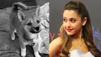 Ariana Grandes NEW Baby! Meet Fawkes - PICTURES