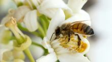 French PM says ban on 'bee-killer' pesticide will go ahead