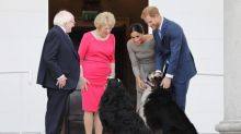 Meghan and Harry in Ireland: Duke and Duchess of Sussex meet president's adorable Bernese Mountain dogs Brod and Sioda