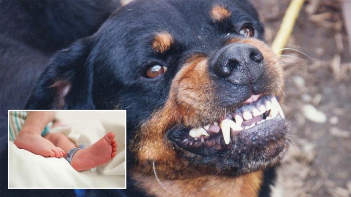 Newborn baby dies after horrific dog attack in New Zealand