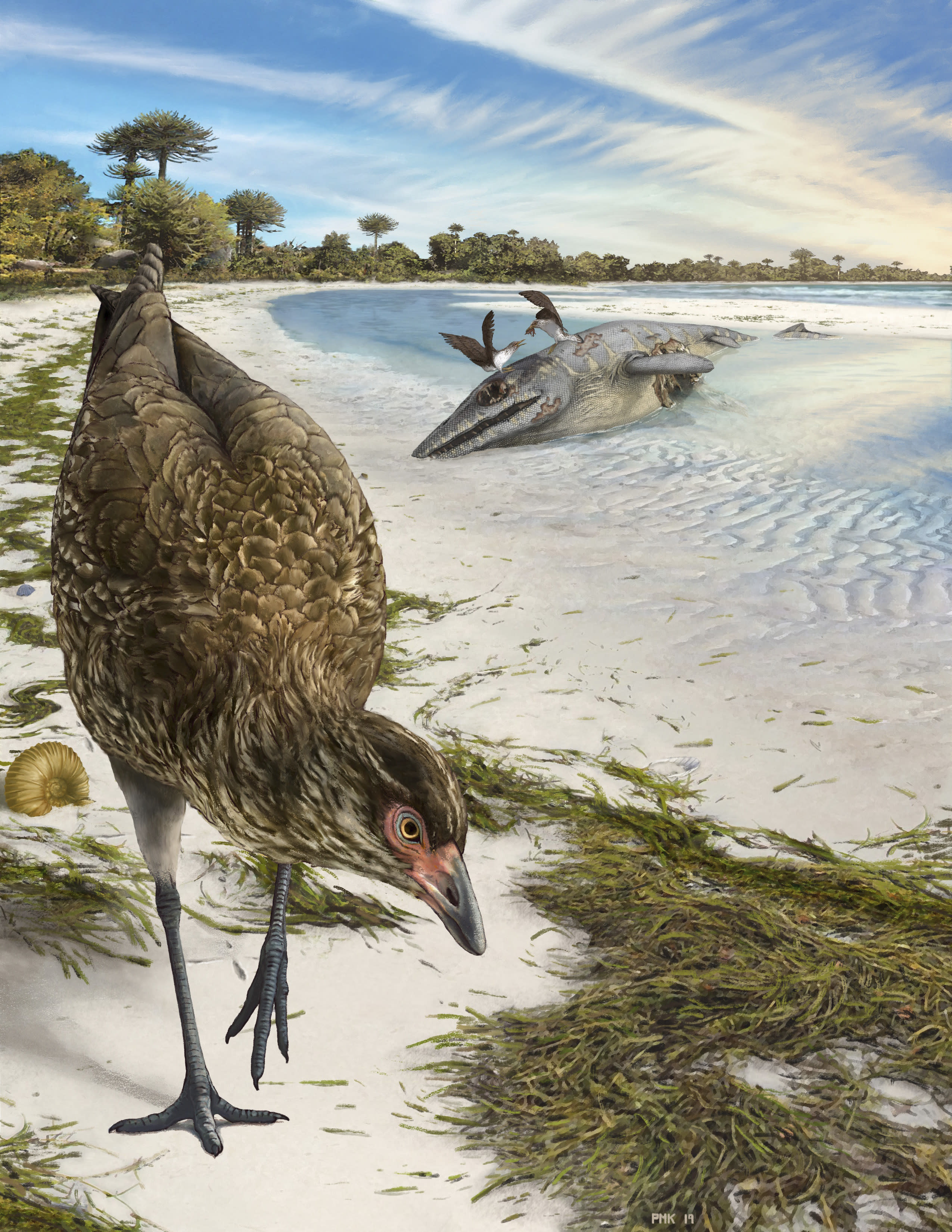 Most Ancient Fossil Of Modern Bird Was Found