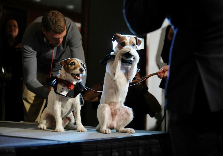 Uggie (l) with his understudy Dash (AFP Photo/ROBYN BECK)