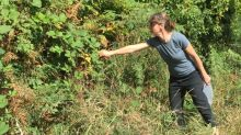 How to have a berry good time foraging this summer