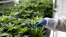 Canopy Growth hits new 2020 high on record quarterly revenue, legalization boost