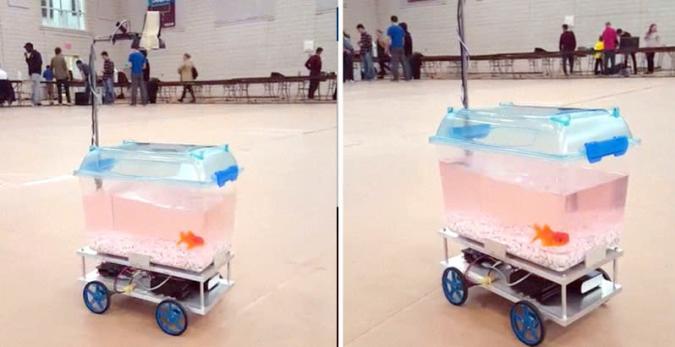 Landgang: Fisch steuert Aquarium auf Rädern