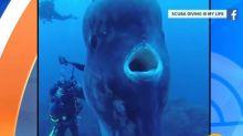 麻州海灣出現「詭異巨獸」?居民狂報警 當局無奈澄清