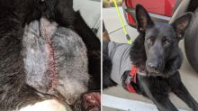 'It was dangling': Horrific growth removed from dog's face