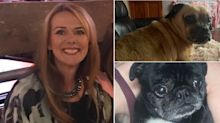 Police investigate dog walker after pet pooches go missing