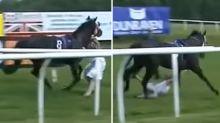 Hero TV reporter throws herself in front of runaway horse