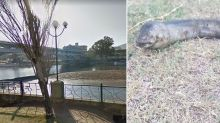 Bizarre creature with huge head spotted in lake baffles locals