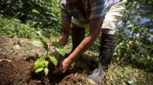 'Hunger season' began early in Central America but investment can improve food security | Opinion