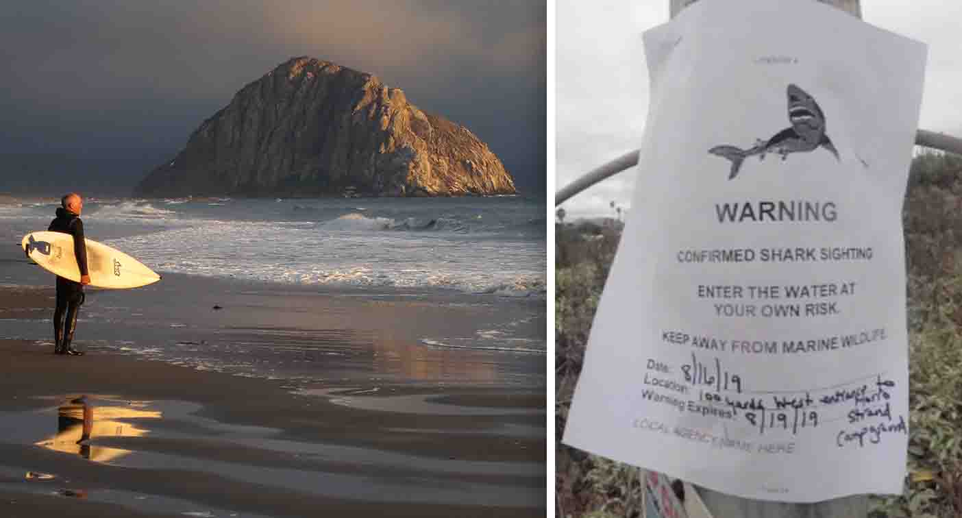 'Enter at your own risk': Ominous signs posted at beach after great white sightings